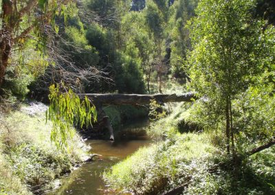 Willow Removal in the Gellibrand River Catchment