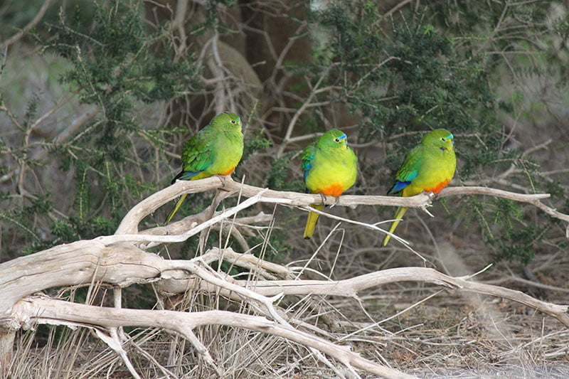 Three OBP's spotted after release